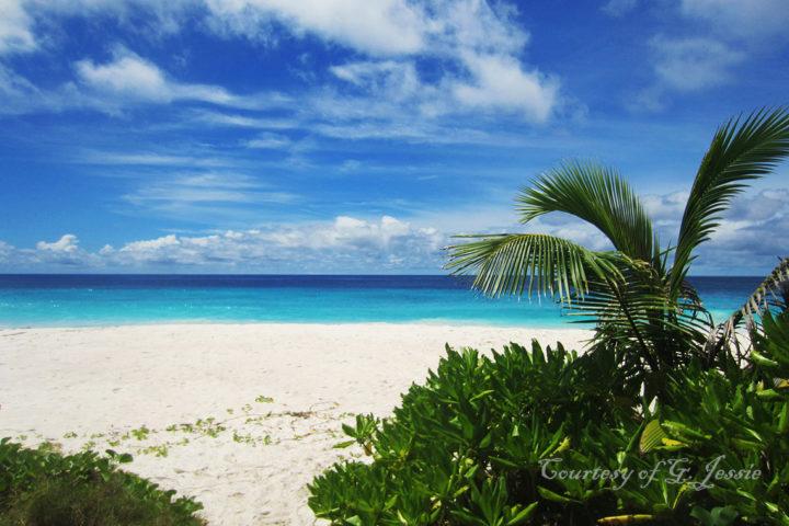 Sister beach through palms